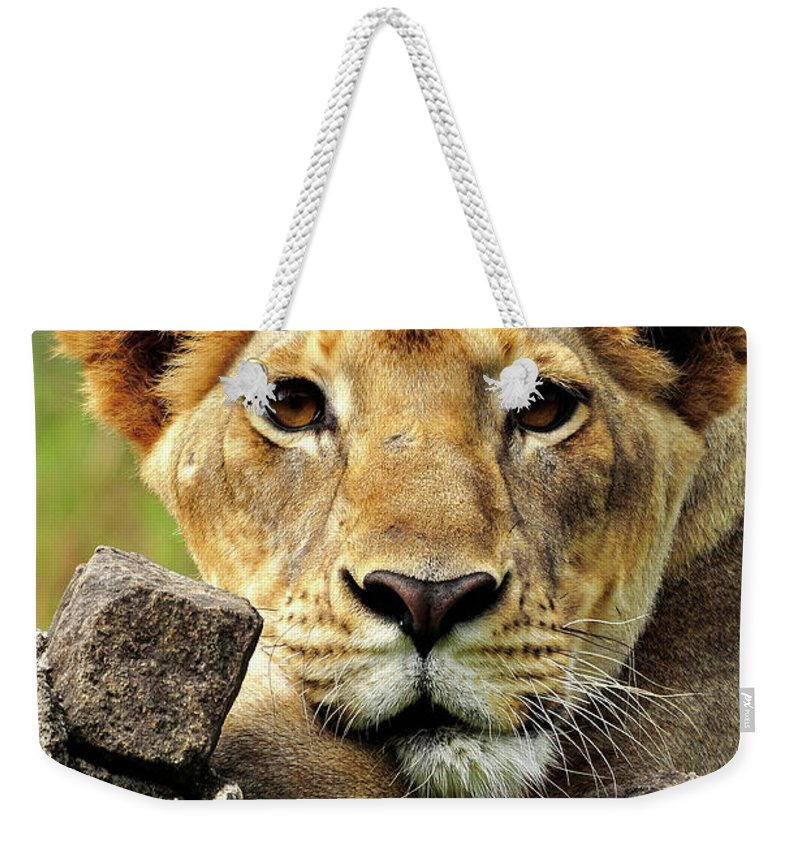 Lioness Weekender Tote Bag featuring the photograph There Is No Fear In Love by Joseph Franco