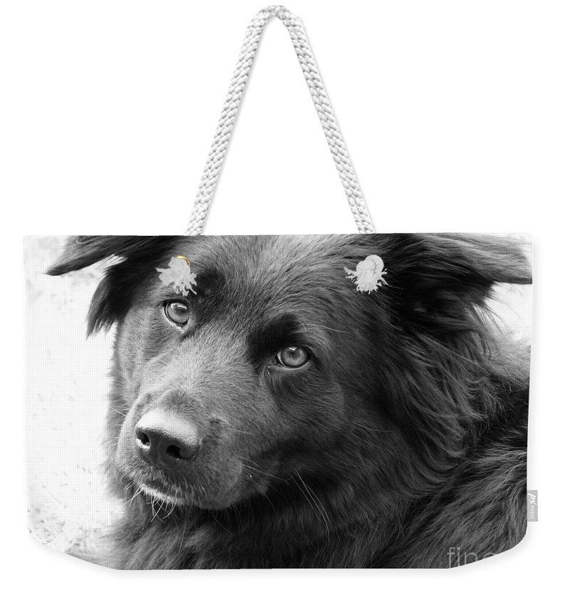 Dog Weekender Tote Bag featuring the photograph Thinking by Amanda Barcon