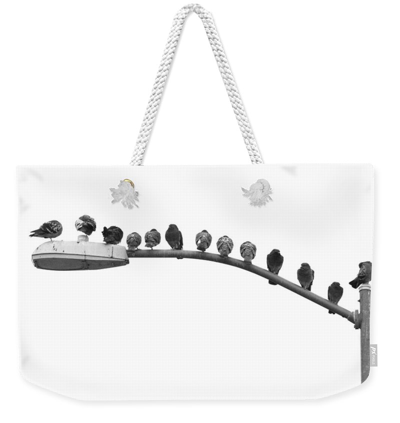 Birds Weekender Tote Bag featuring the photograph Thirteen Birds by James BO Insogna