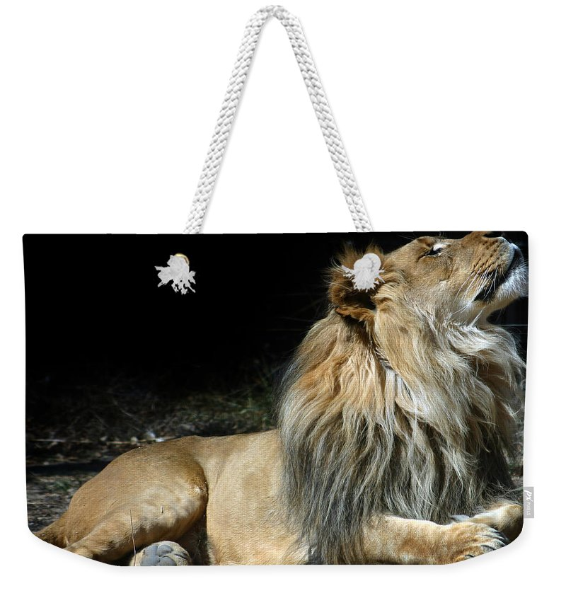 Lion Weekender Tote Bag featuring the photograph This Is My Best Side by Anthony Jones