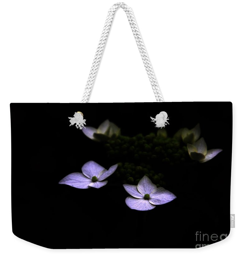 Hydrangea Weekender Tote Bag featuring the photograph This Little Light Of Mine by Amanda Barcon