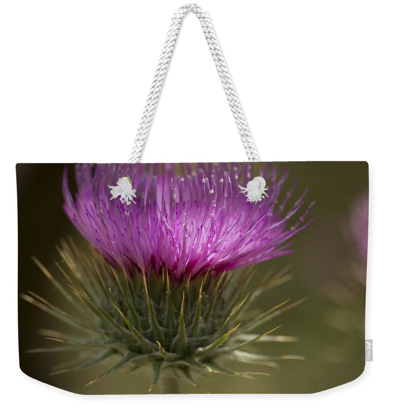Color Weekender Tote Bag featuring the photograph Thistle Flower by Jean Noren