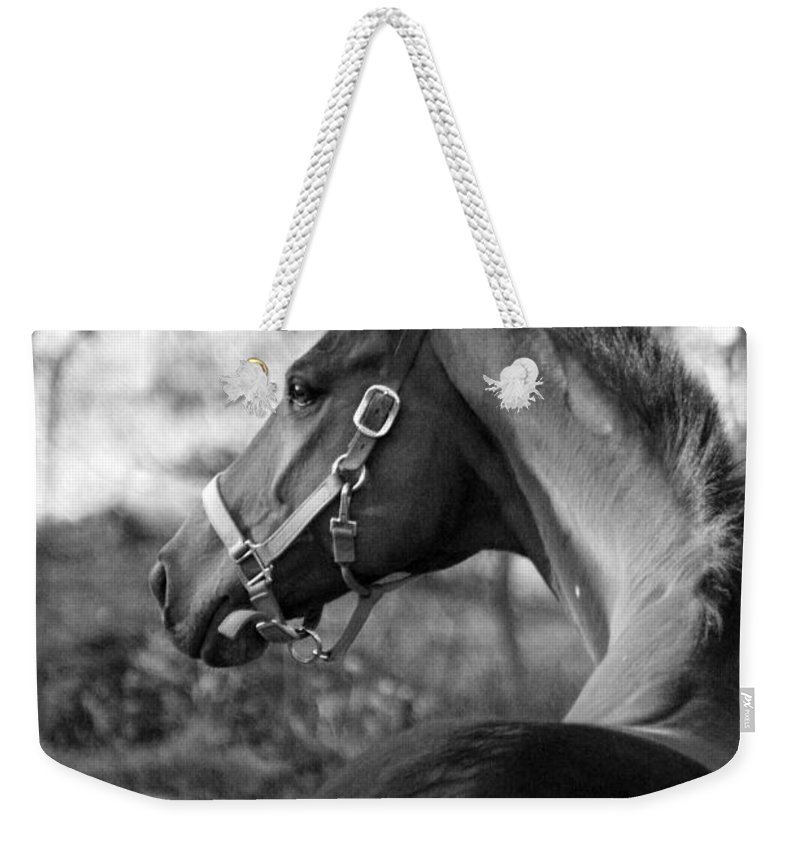 Thoroughbred Weekender Tote Bag featuring the photograph Thoroughbred - Black And White by Angela Rath