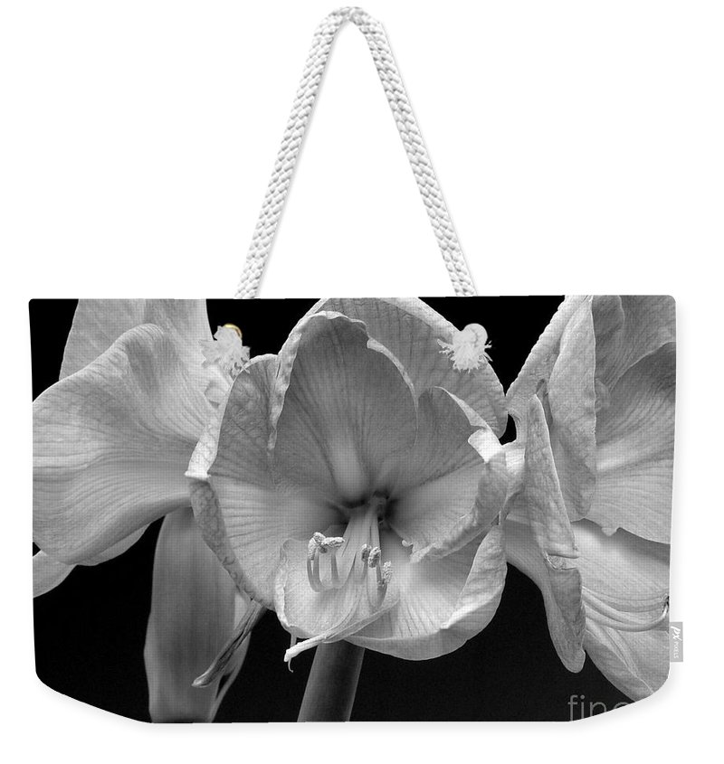 Amaryllis Weekender Tote Bag featuring the photograph Three Amaryllis Black And White Print by James BO Insogna