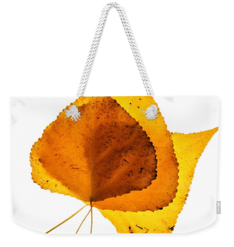 Cottonwood Leaves Weekender Tote Bag featuring the photograph Three Backlit Cottonwood Leaves In Autumn On White by Vishwanath Bhat