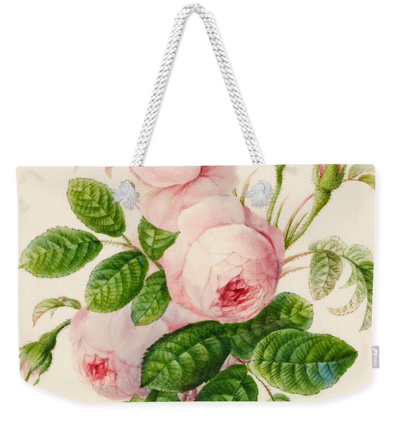 Watercolor Weekender Tote Bag featuring the painting Three Centifolia Roses With Buds by Caroline Adrien