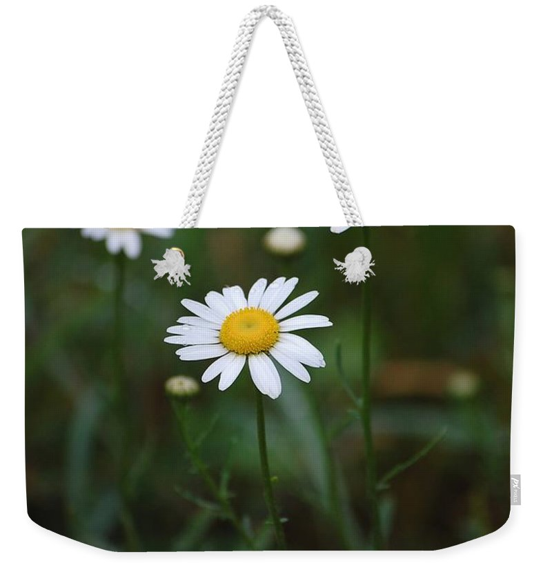 Flowers Weekender Tote Bag featuring the photograph Three Daisy's by Robert Meanor