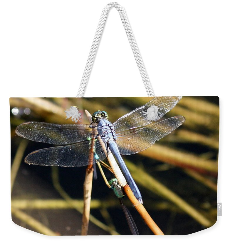 Dragonflies Weekender Tote Bag featuring the photograph Three Dragonflies On One Reed by Carol Groenen