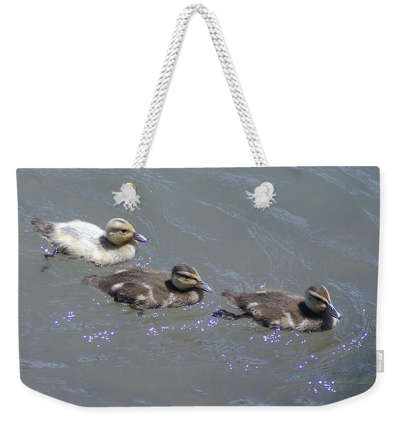 Fowl Weekender Tote Bag featuring the photograph Three Duckies by Jeff Swan