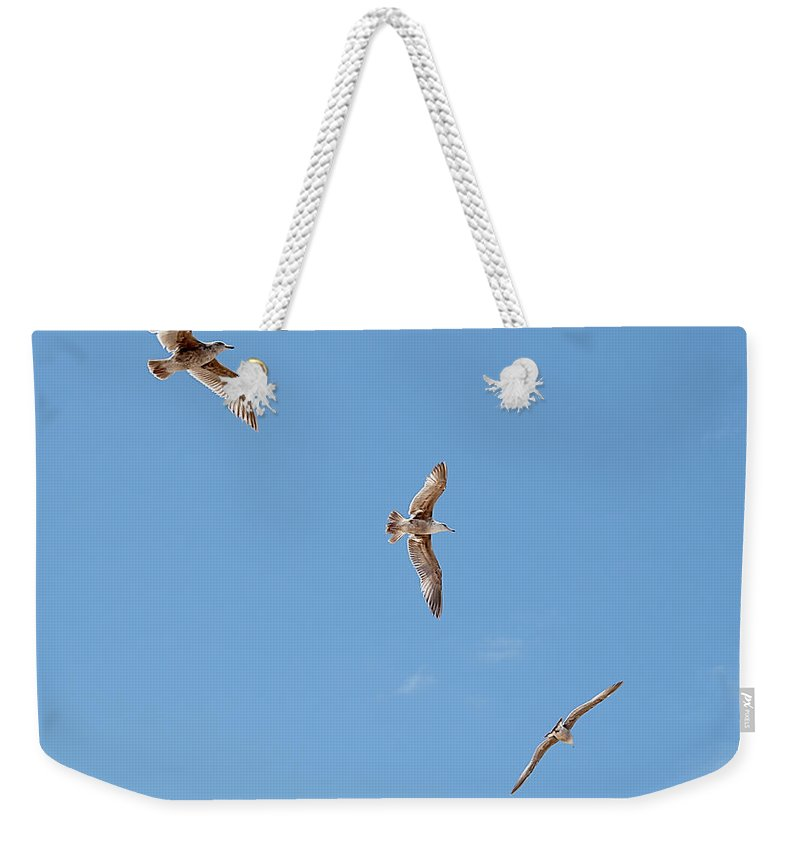 Flying Weekender Tote Bag featuring the photograph Three Gulls by Jay Billings