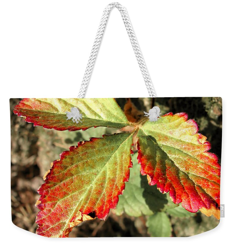 Forest Weekender Tote Bag featuring the photograph Three Leaves by Todd A Blanchard