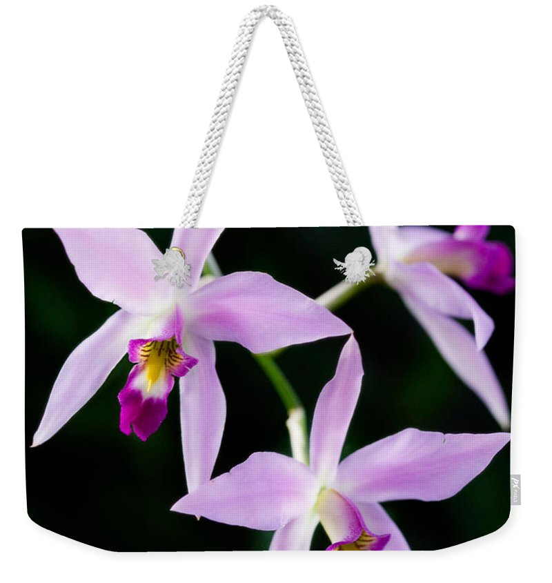 Orchid Weekender Tote Bag featuring the photograph Three Orchids by Marilyn Hunt