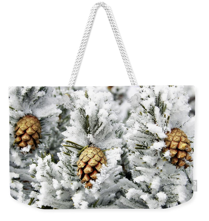 Frosty Weekender Tote Bag featuring the photograph Three Pinecones by Marilyn Hunt