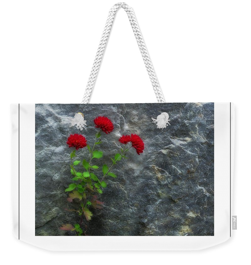 Mum Weekender Tote Bag featuring the photograph Three Red Mums Poster by Mike Nellums