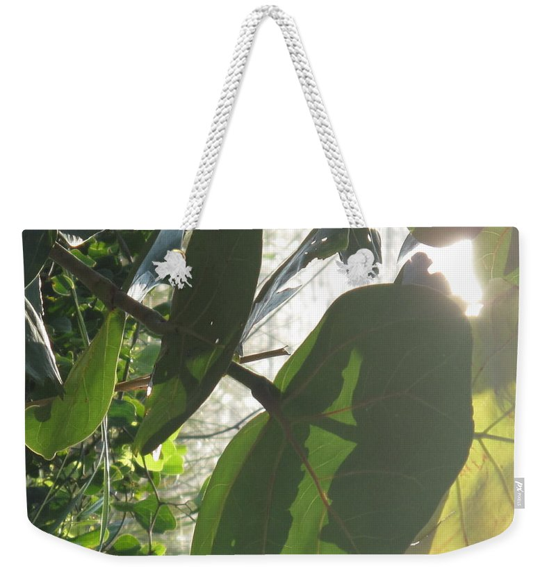 Sea Weekender Tote Bag featuring the photograph Through The Sea Grape Leaves by Ian MacDonald