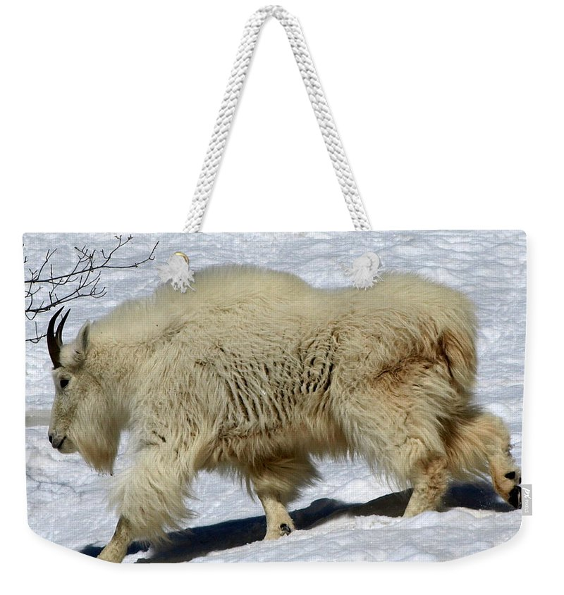 Mountain Goats Weekender Tote Bag featuring the photograph Through The Snows by DeeLon Merritt