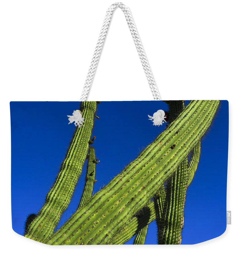 Tickle Me Weekender Tote Bag featuring the photograph Tickle Me by Skip Hunt