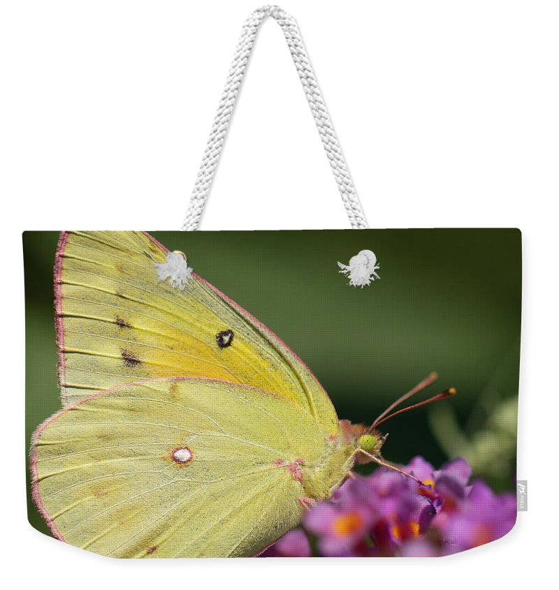 Butterfly Weekender Tote Bag featuring the photograph Tickled Pink by Shelley Neff