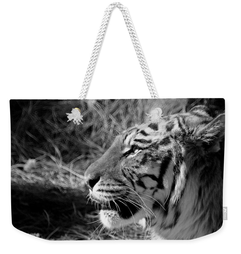 Tiger Weekender Tote Bag featuring the photograph Tiger 2 Bw by Ernie Echols