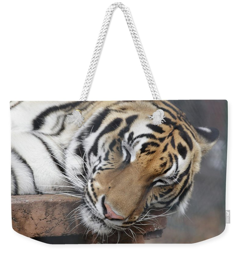 Tiger Weekender Tote Bag featuring the photograph Tiger 2 by Jim Allsopp