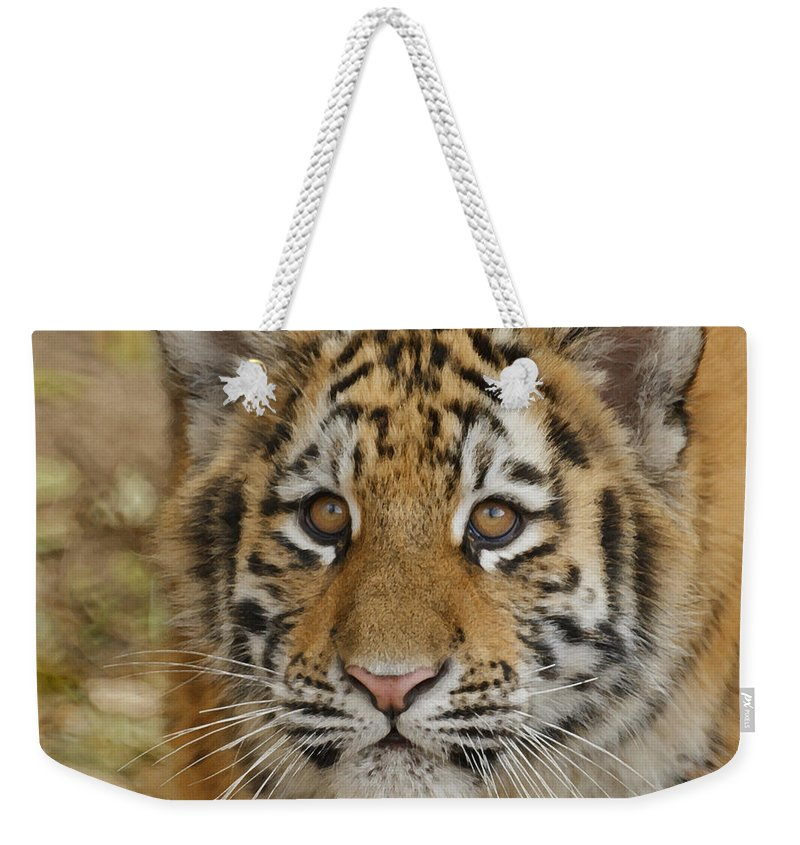 Tiger Cub Weekender Tote Bag featuring the photograph Tiger Cub by Ernie Echols