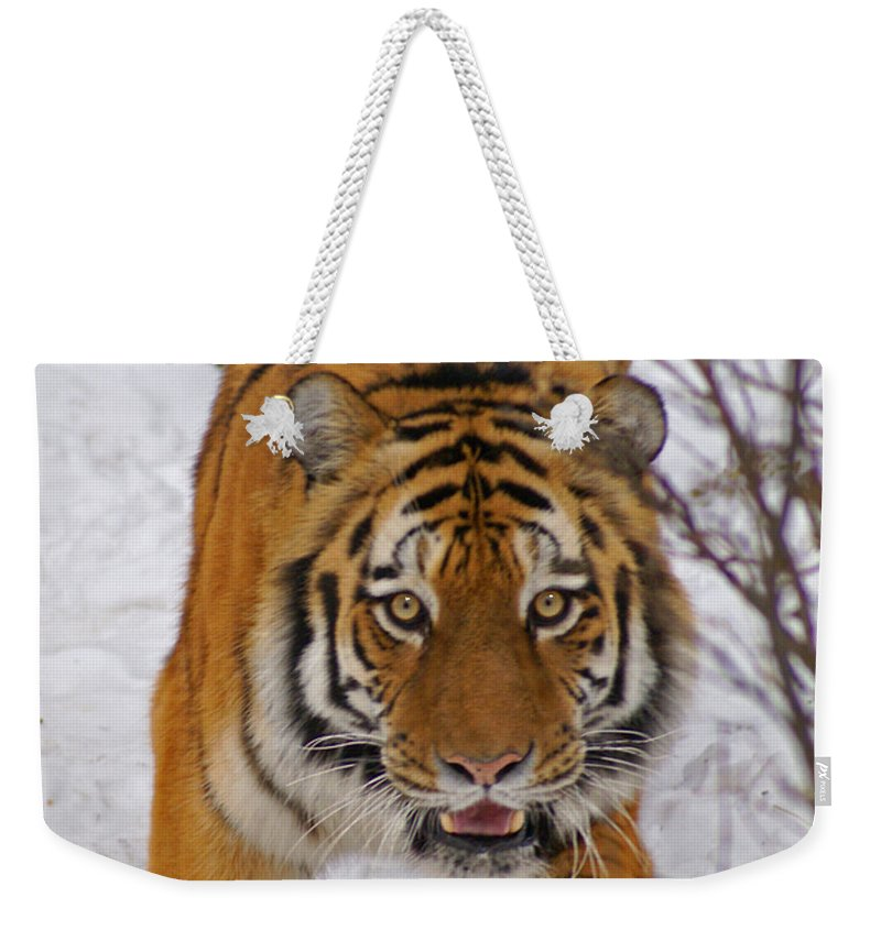 Tiger Weekender Tote Bag featuring the photograph Tiger by Heather Coen