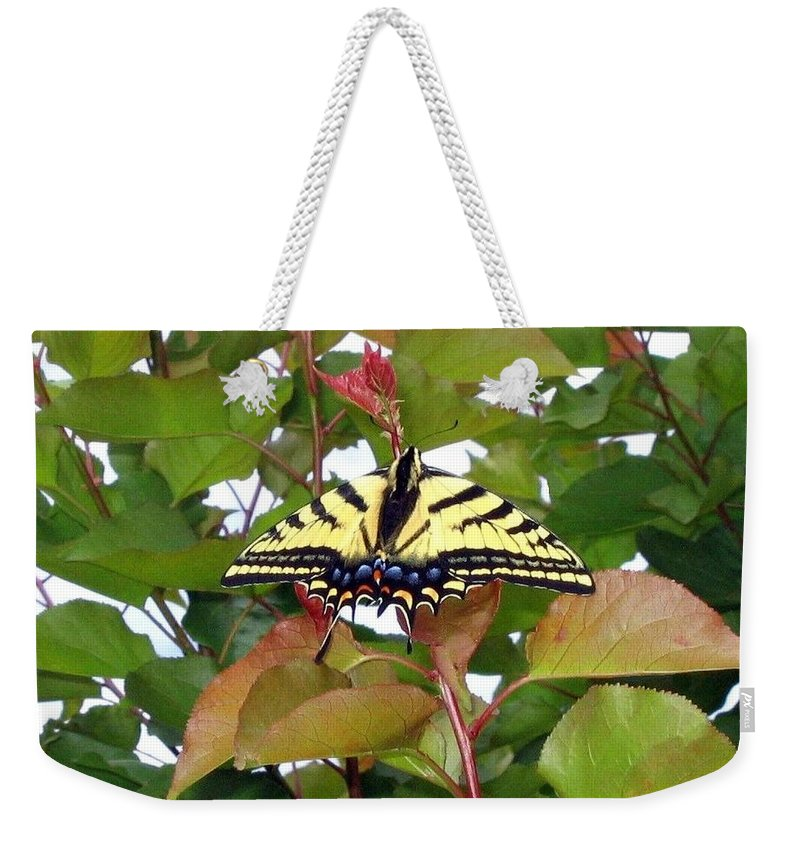 Butterfly Weekender Tote Bag featuring the photograph Tiger Swallowtail Butterfly by Will Borden