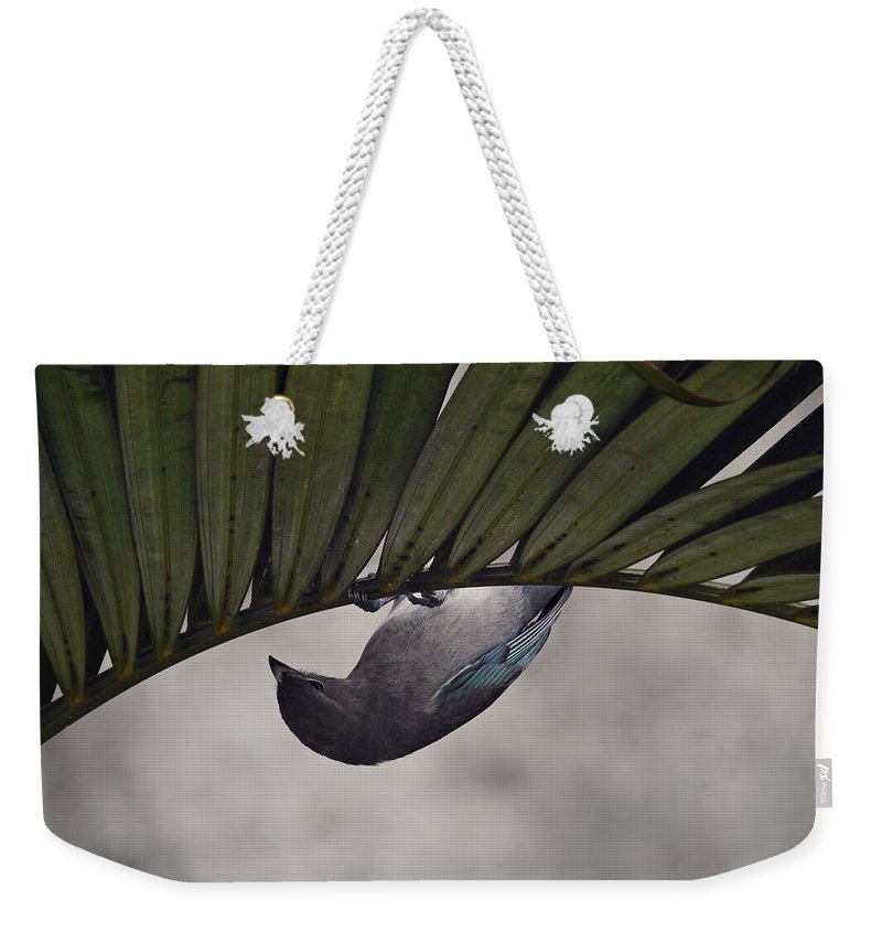 Birdie Weekender Tote Bag featuring the photograph Tightrope Walker Bird by Fbmovercrafts