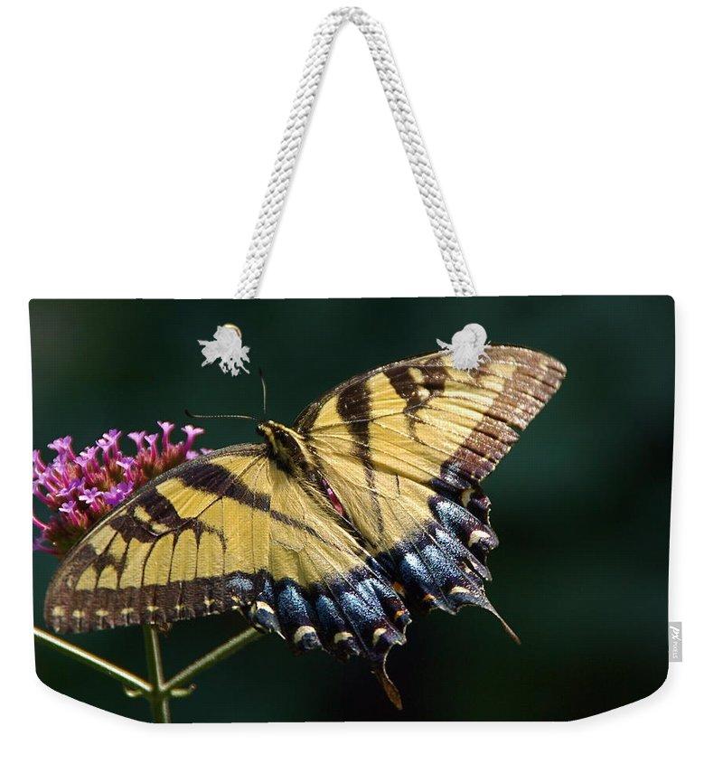 Tiger Swallowtail Weekender Tote Bag featuring the photograph Tigress And Verbena by Byron Varvarigos