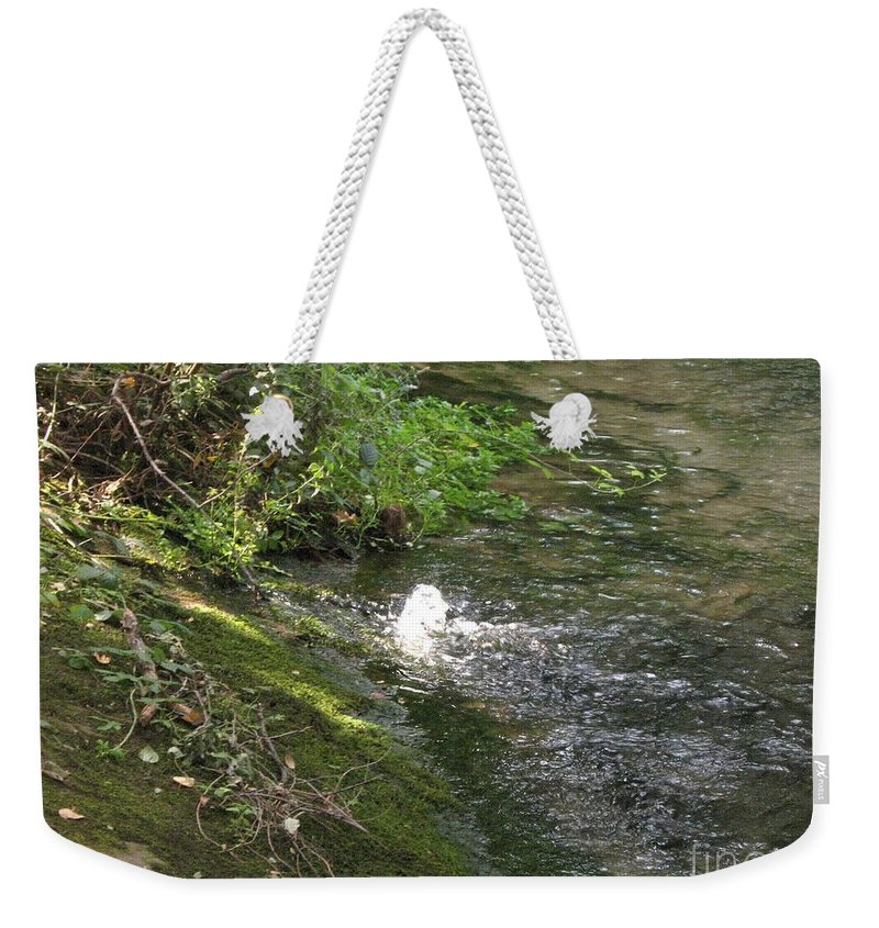 River Weekender Tote Bag featuring the photograph Timava's Spring I by Dragica Micki Fortuna