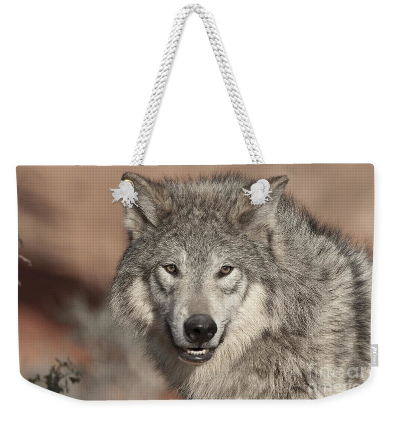 Wolves Weekender Tote Bag featuring the photograph Timber Wolf Portrait by Sandra Bronstein