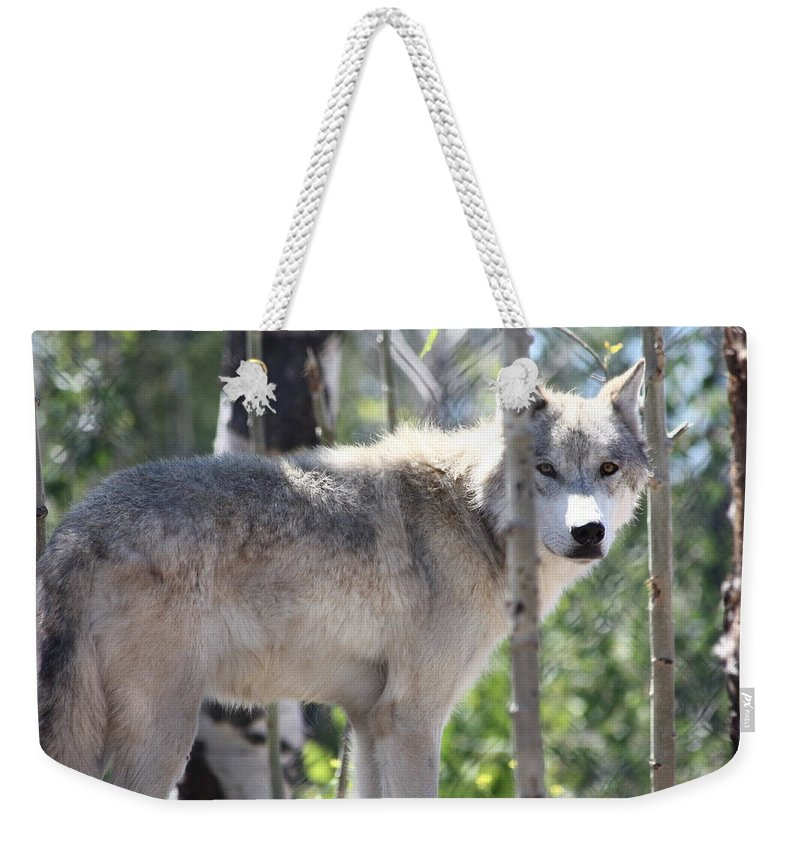 Timber Wolf Weekender Tote Bag featuring the photograph Timber Wolf by Shane Bechler