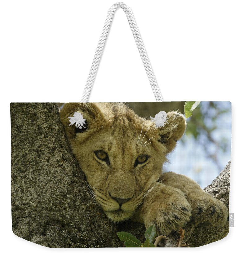 Africa Weekender Tote Bag featuring the photograph Time for a Nap by Michele Burgess