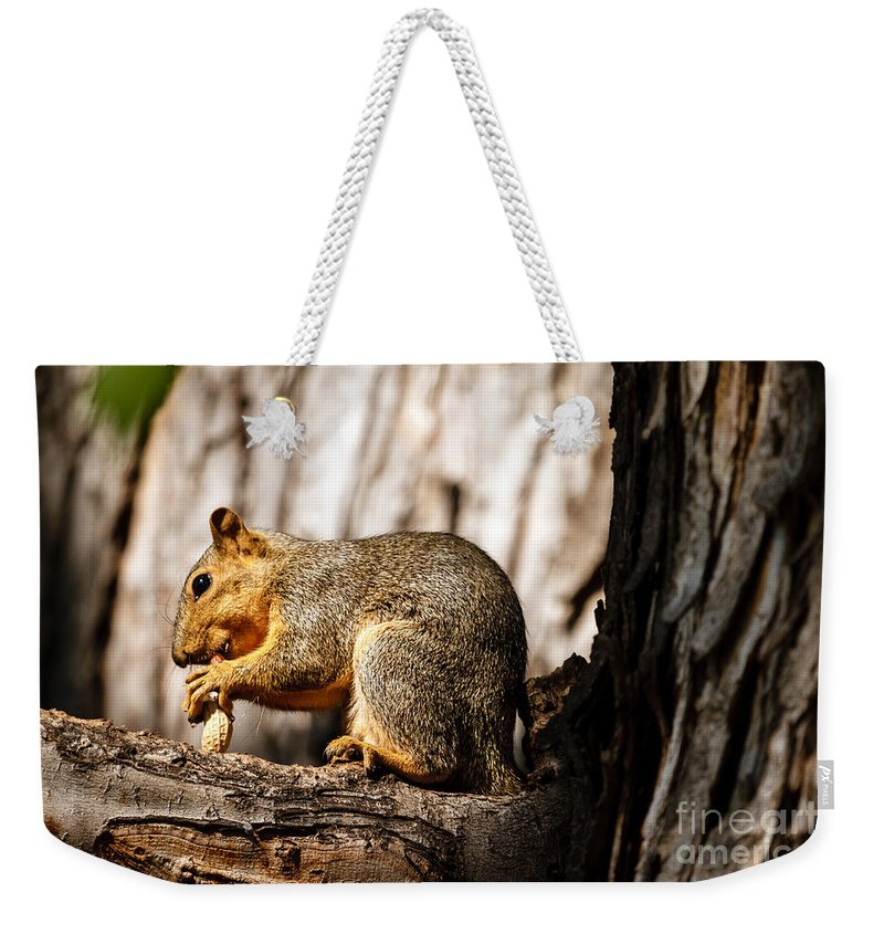 Squirrel Weekender Tote Bag featuring the photograph Time For A Peanut by Robert Bales