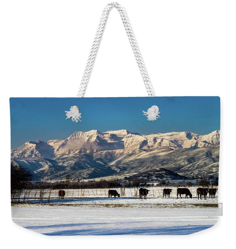 Bos Taurus Weekender Tote Bag featuring the photograph Timpanogos From The North Fields by TL Mair