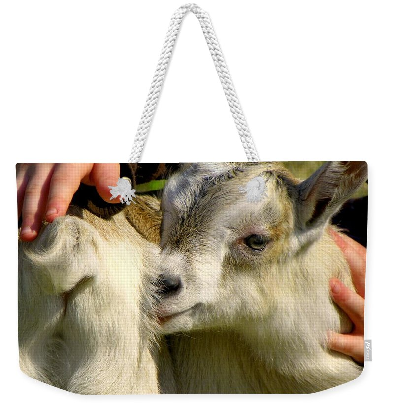 Baby Goats Weekender Tote Bag featuring the photograph Tiny Hands by Karen Wiles