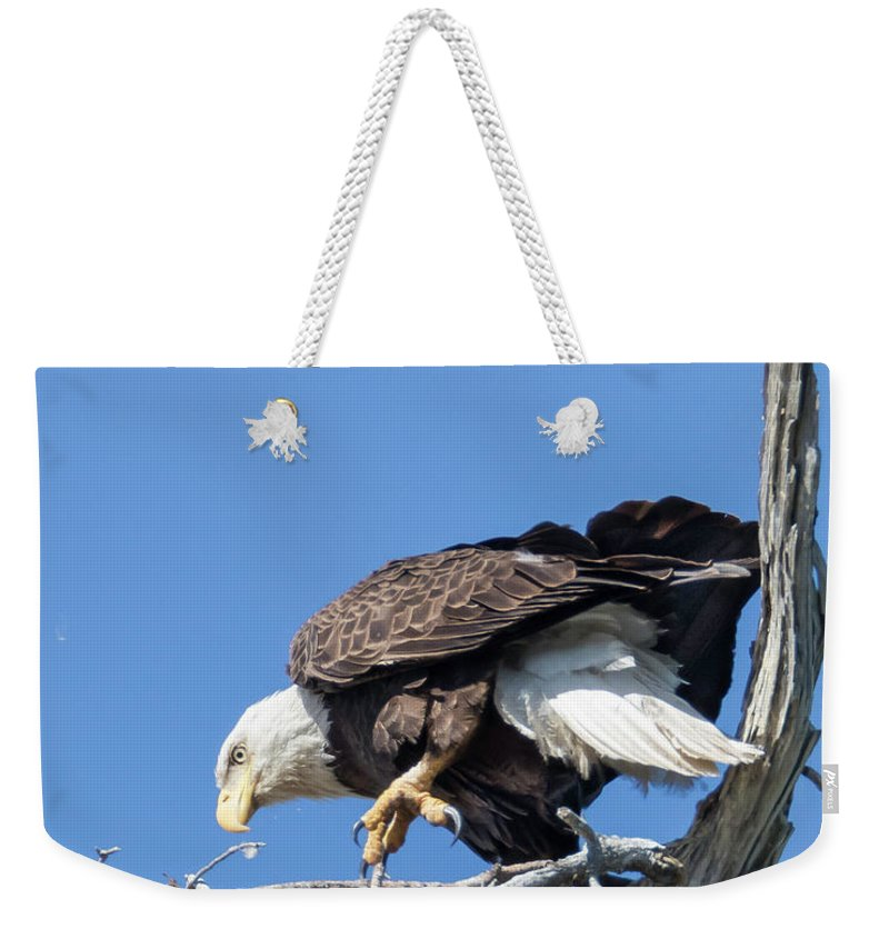 Eagle Weekender Tote Bag featuring the photograph Tip Toeing Across Nest by Tony Fruciano