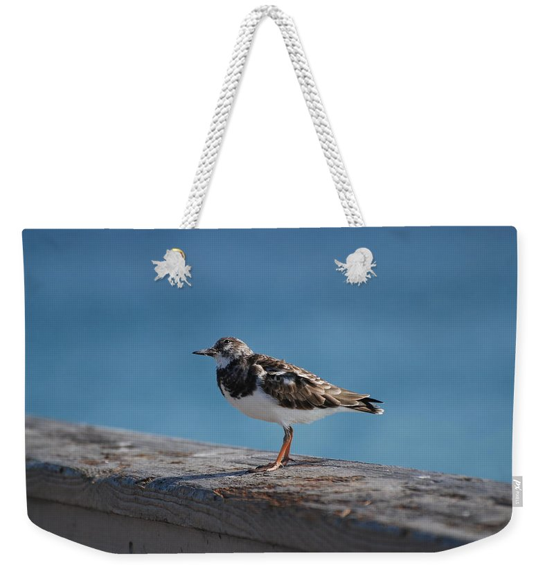 Bird Weekender Tote Bag featuring the photograph Tippi Hedren by Rob Hans