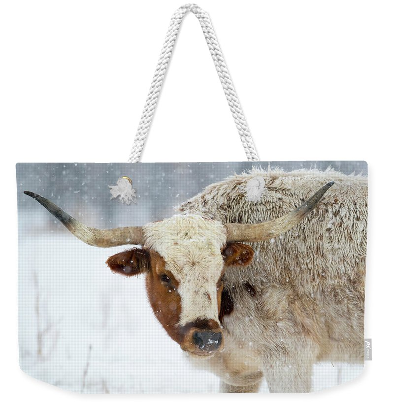 Texas Longhorn Weekender Tote Bag featuring the photograph Tired Of Snow by Mike Dawson