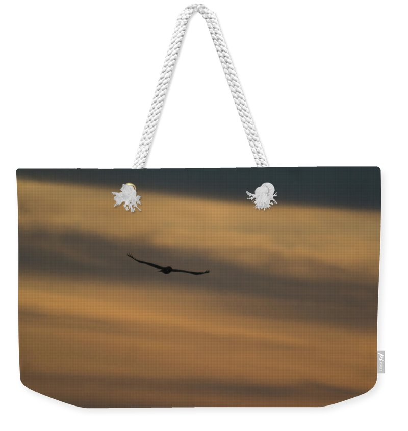 Hawk Weekender Tote Bag featuring the photograph To Soar - Free by Douglas Barnett