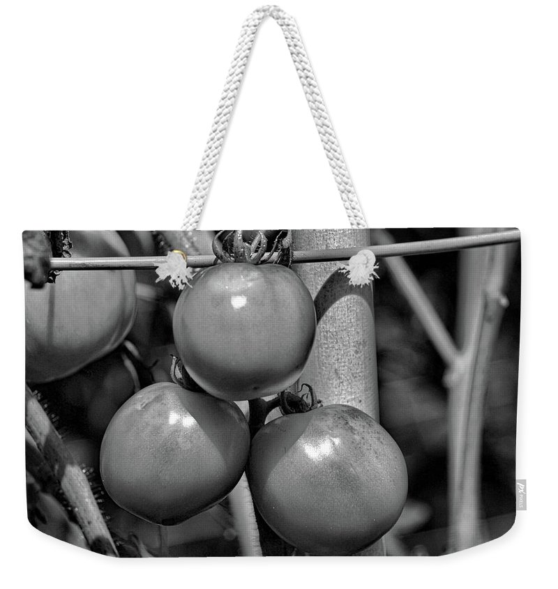 Tomatoes Weekender Tote Bag featuring the photograph Tomatoes On The Vine Bw by Selena Wagner
