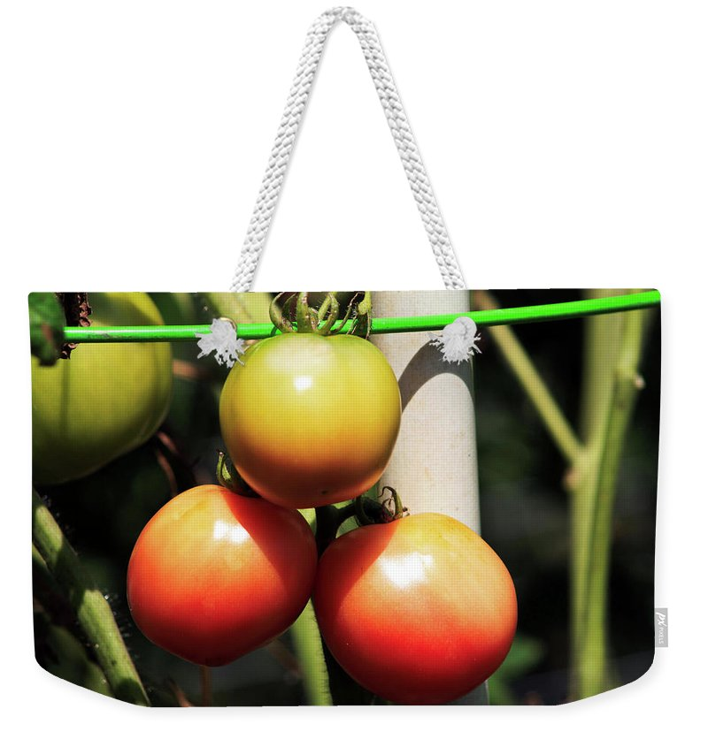 Tomatoes Weekender Tote Bag featuring the photograph Tomatoes Ripening On The Vine by Selena Wagner