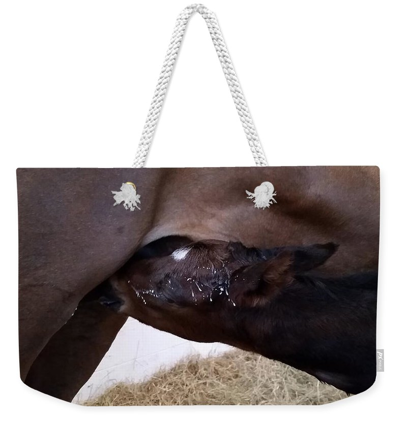 Horse Weekender Tote Bag featuring the photograph Too Much on tap by Kristen Wesch