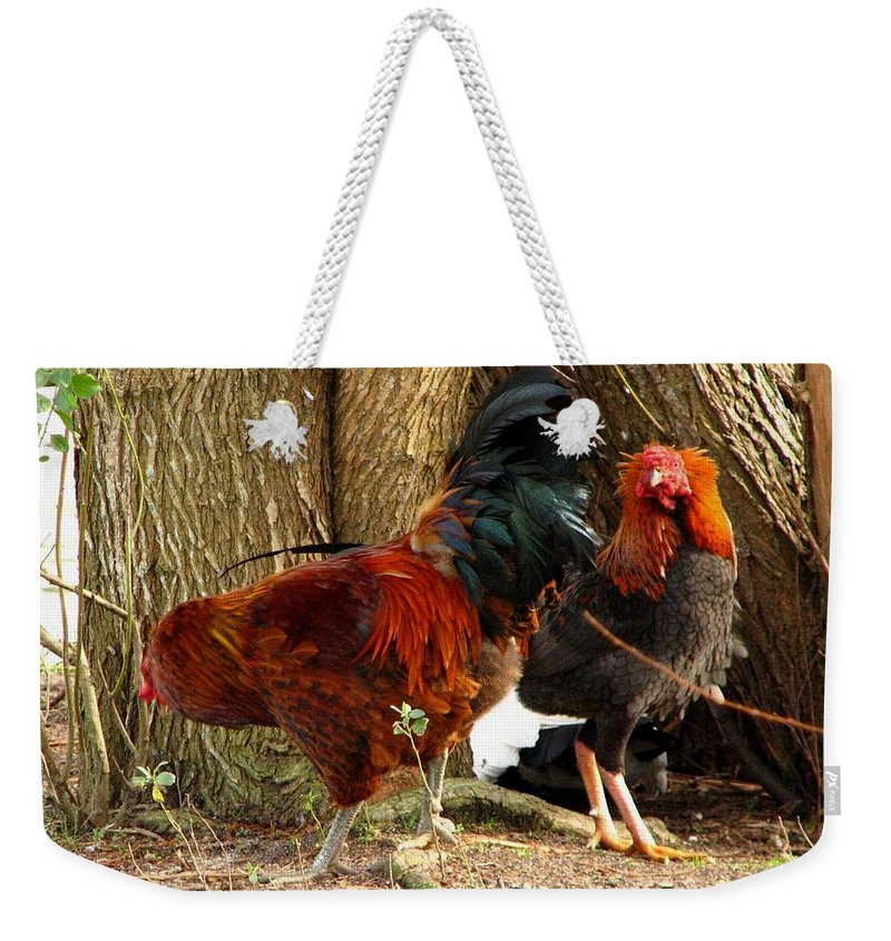 Chicken Weekender Tote Bag featuring the photograph Too Pretty To Eat by J M Farris Photography