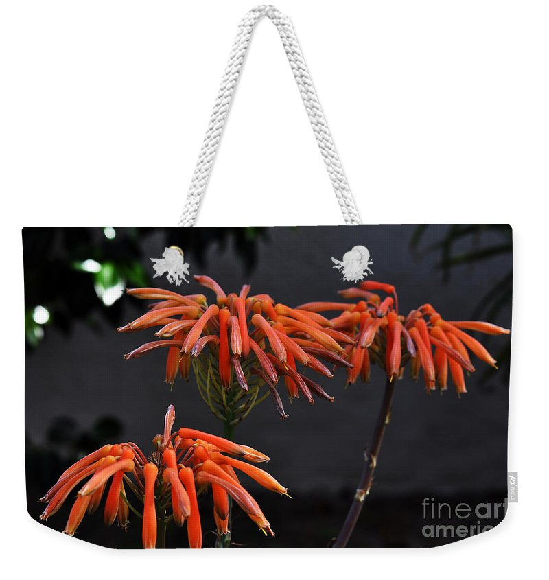 Clay Weekender Tote Bag featuring the photograph Top Of Aloe Vera by Clayton Bruster