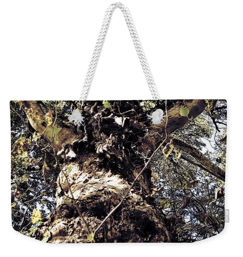 Tree. Forest. Leaf Weekender Tote Bag featuring the photograph Topiary by Scott Wyatt