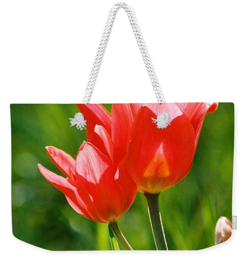 Flowers Weekender Tote Bag featuring the photograph Toronto Tulip by Steve Karol