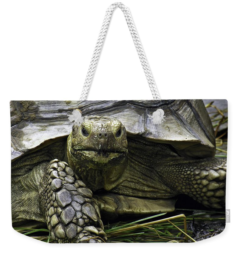 Reptile Weekender Tote Bag featuring the photograph Tortoise's Stare by Betty Denise