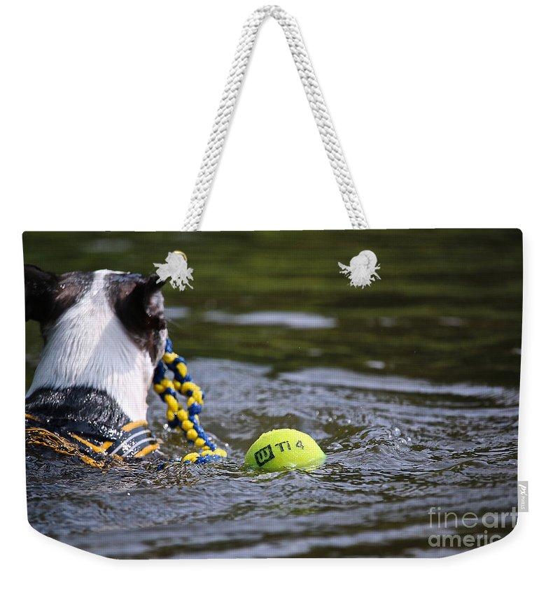 Boston Terrierboston Terrier Weekender Tote Bag featuring the photograph Tow Rope by Susan Herber