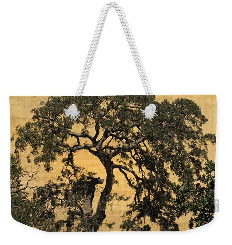 Trees Weekender Tote Bag featuring the photograph Tree Formation 2 by Karen W Meyer